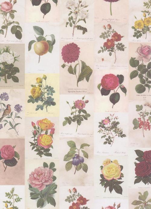 Čtvrtka A4 Botanicals - Růže, ovoce, ptáčci (1 ks)