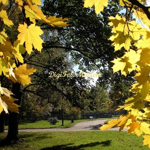 Krásný podzim IV