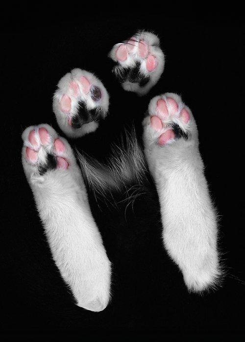 Cat Scan (větší formát - A3)
