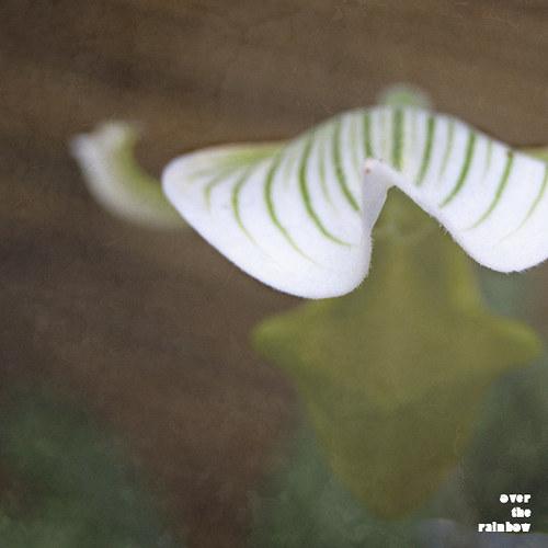 Orchidea II - autorská fotografie, Giclee tisk