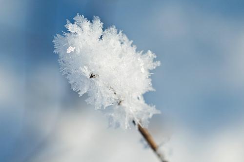 Pod tíhou sněhových vloček III