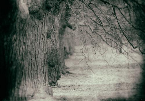 Krajina se starými stromy 3 - fotografie 30x20 cm