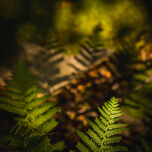 Lesní poezie, autorská fotografie