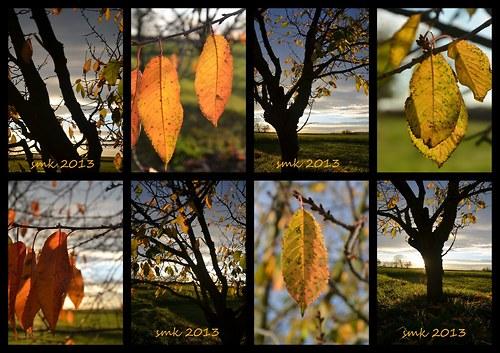Podzimní  -   autorská  fotokoláž