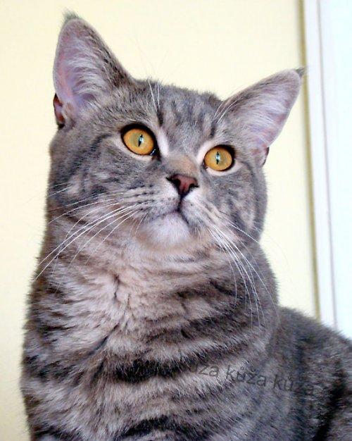 Ferdinand (na pomoc kočkám)