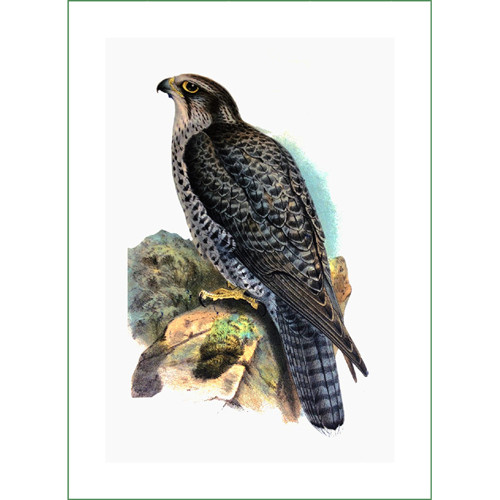 ptáček (20)  (látkový panel)
