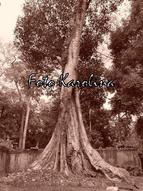 Fotografie Kambodža - Ta Prohm