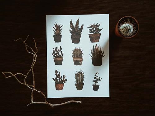 sukulenty a kaktusy