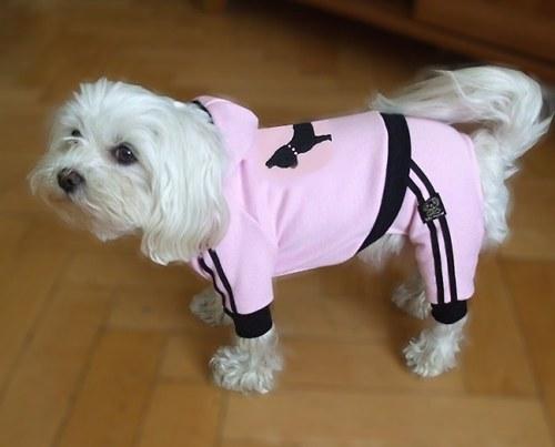 Ružový joging pre psíka  XS