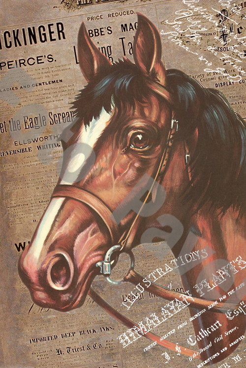 Vintage motiv - kůň