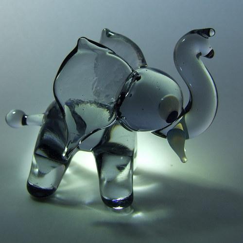 sloník šedý