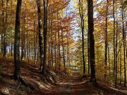 Fotografie Podzim v lese
