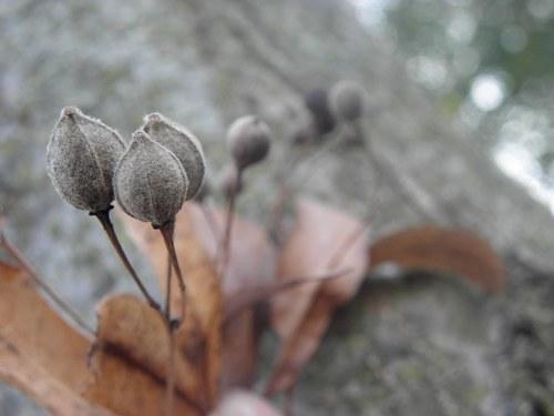 Dech podzimu