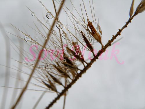 Je po dešti - kapky deště - tráva