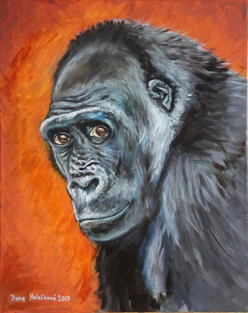 Gorila nížinná - autorský arch