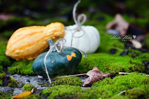 Barevné plody podzimu