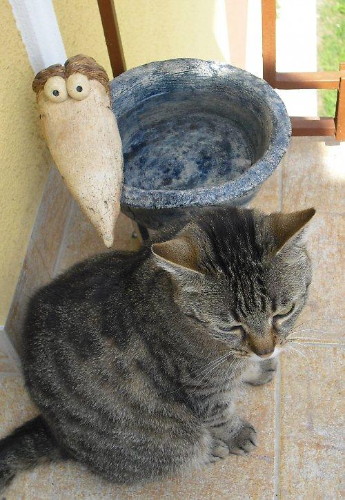 Pítko pro ptáčky, kočičky i pejsky