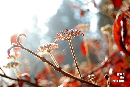 Červený podzim – autorská fotografie