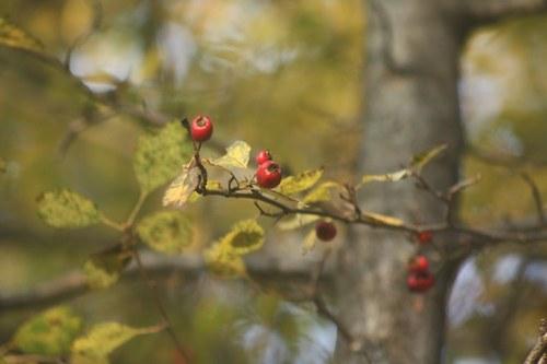 Červené knoflíčky