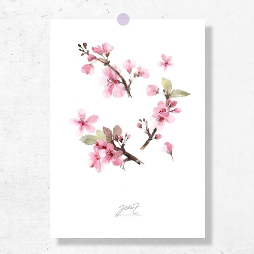 Sakura. Signovaný tisk do rámu A4