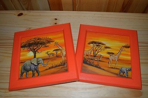 Obrázek - safari