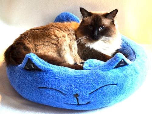 Kočičí pelíšek modrý