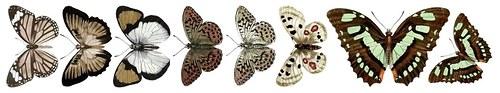 Oboustranný Papírový pásek - Motýli Brown