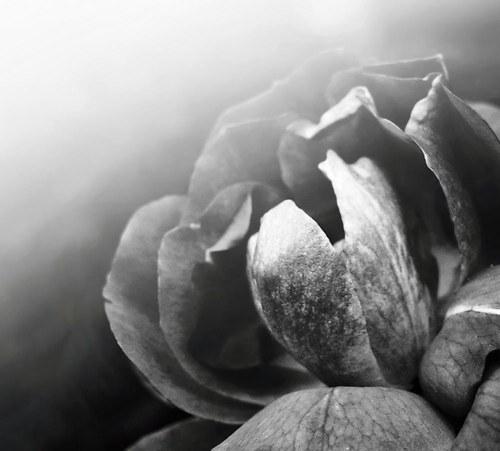černobílá kráska