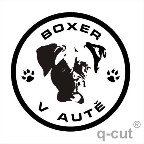 Boxer v autě