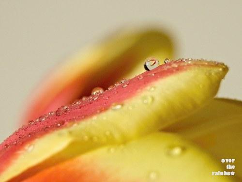 Jarní rosa - autorská fotografie