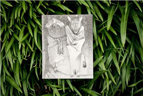Kaloň v šerosvitu • pohlednice přírodní