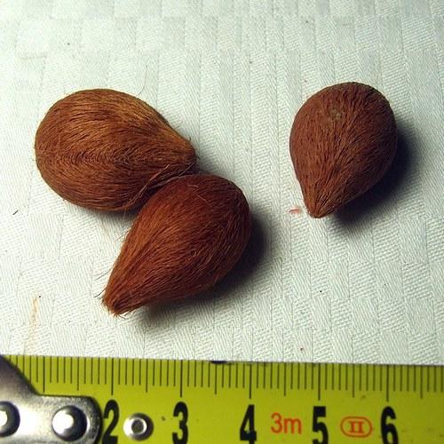 Tropické plody, cena za 5 ks