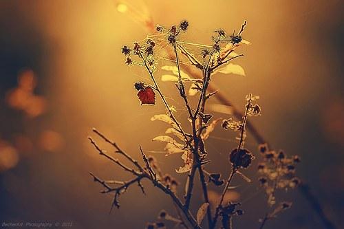 Autumn Harmony VII