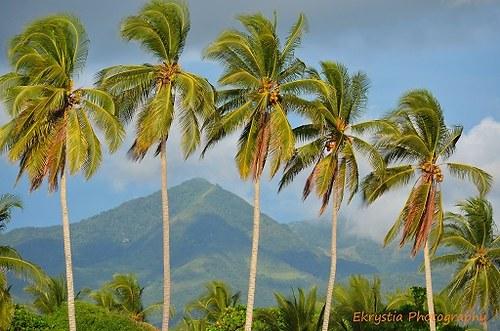 Palmy na pláži El Salvador