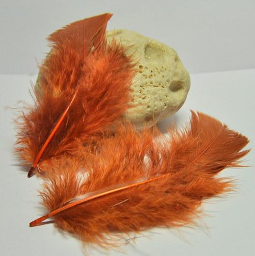 Turkey -  větší peří rezavé 5-9cm/2ks