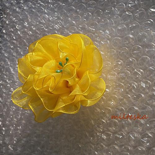 žlutá sluníčková