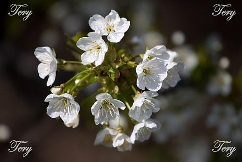 Jarní větvička 2