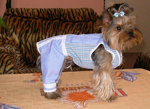 70. Něco pro psí uličníky-Modrý kalhotky
