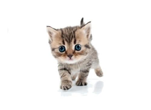Panel - teplákovina  kotě