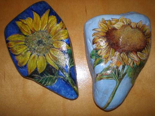 Slunečnice - různé variace