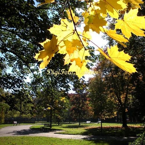 Krásný podzim V