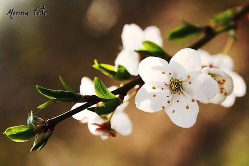 Hurá jaro