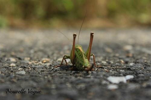 Podívám se ti na kobylku II