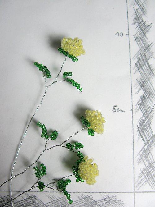 Růže korálková žlutá