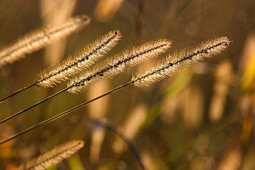 """Fotografie \""""Letní traviny\"""""""