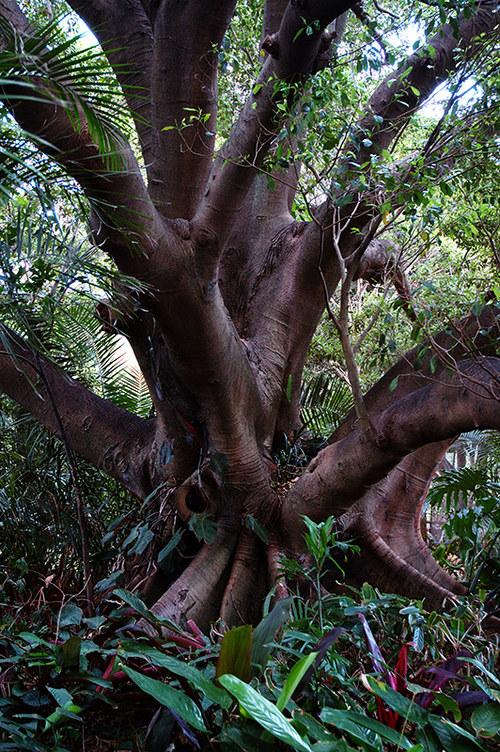 Strom v Sydney