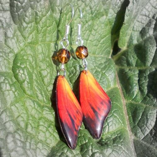 Náušnice motýl - mot43