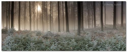 Zimní ráno v lese