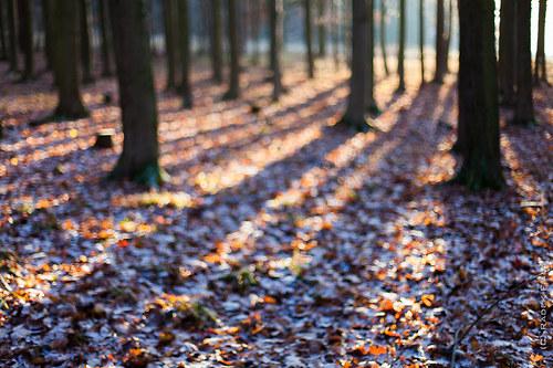 Nejasná představa o lese 2