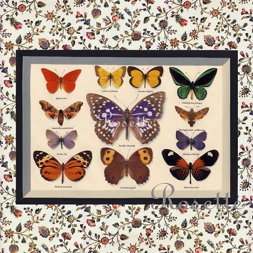 Slečno, mám doma krásnou sbírku motýlů